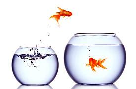 Treff zweier Fische, symbolisert glückliche Auswanderer bzw. Ortswechsel