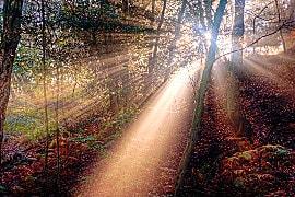 Waldlichtung, Astrologie als Lichtbringer
