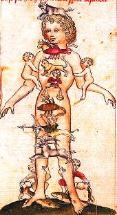 Medizinische Astrologie: Zuordnung Organ zu Tierkreiszeichen