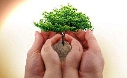 Bäumchen pflanzen, schwierige Kinder brauchen Pflege