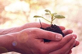 Wachsende Pflanze symbolisiert Entwicklung im Persönlichkeitshoroskop